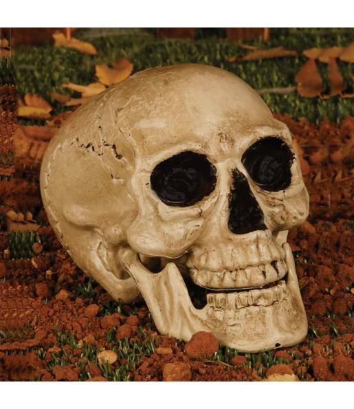Crâne Squelette