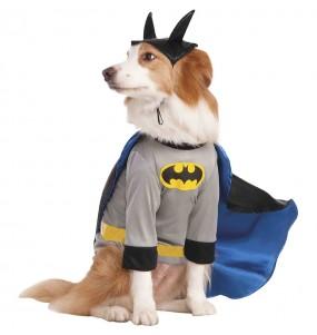 Déguisement Batman pour chien