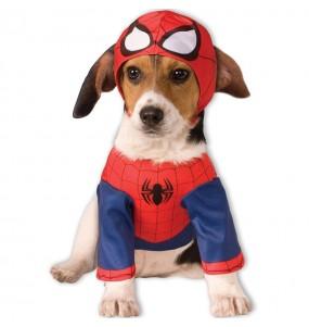Déguisement Spiderman pour chien
